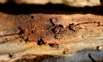 Signs That Your Home Is About To Be Invaded By Pests